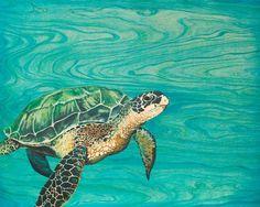 """Honu"" sea turtle fine art print by Emily Brantley"