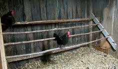 fresh air chicken coop | chicken coop necessities roosts