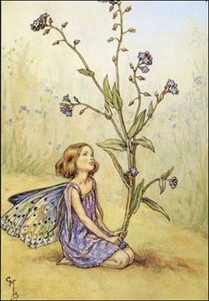 ≍ Nature's Fairy Nymphs ≍ magical elves, sprites, pixies and winged woodland faeries - forget~me~not fairy, Cicely Mary Barker