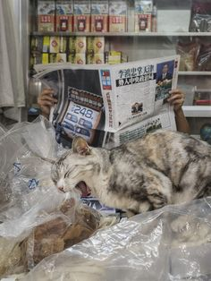 Photographer Documents The Secret Lives Of Cats Living in Hong Kong's Stores (12+ Pics)