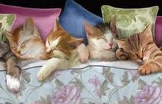 Image result for sleepy cats