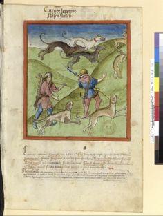 Tacuinum Sanitias 15C, Bibliothèque nationale de France, Latin 9333, fol.70 Chasse au lievre