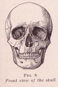 File:Front View of Skull.jpg