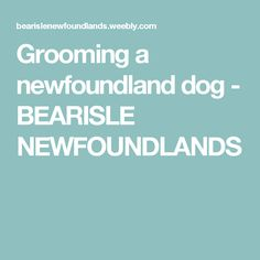 Grooming a newfoundland dog - BEARISLE NEWFOUNDLANDS - Tap the pin for the most adorable pawtastic fur baby apparel! You'll love the dog clothes and cat clothes! <3