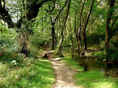 The camino follows a beautiful path beside a a stream in Northern Spain