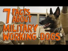 7 Fascinating Facts about Military Working Dogs - YouTube