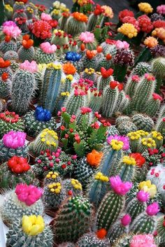 great reference for painting blooming cacti on rocks