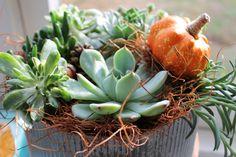 """A fall succulent """"nest""""."""