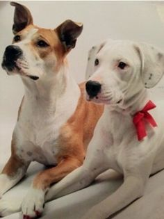 Marley and Zeus need a home where they can stay together