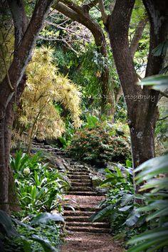 Kauai, Hawaii Allerton Botanical Gardens - Just read a partial autobiography of a woman who took a job here for several years. The gardens look amazing. Kauai Vacation, Hawaii Honeymoon, Aloha Hawaii, Vacation Places, Hawaii Travel, Dream Vacations, Vacation Spots, Places To Travel, Places To See