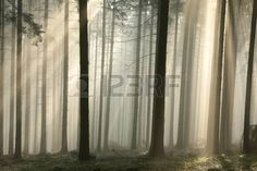 Image result for illuminated forest