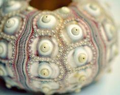 Stunning Sea Urchin