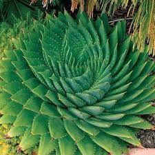 Risultati immagini per foglie piante tropicali