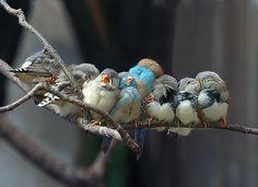 birds cuddle :)