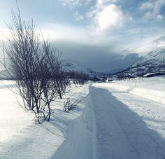 fuglehund skitur - Google-søk