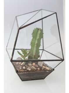 Assembly New York Geometric Terrariums - Two $340