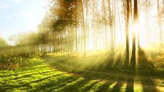 Importance of Sunlight