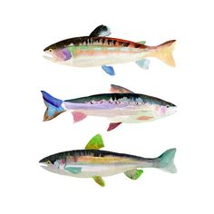 Trout Watercolor Print.  Gift for Dad. by SnoogsAndWilde on Etsy, $34.00 kitchen art