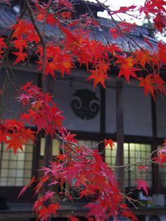 仏通寺、広島/Buttsu-ji #apan hiroshima