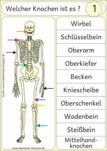 The human skeleton . (Adventure Inclusion) - The human skeleton … Best Picture For school yard For Your Taste You are looking for something, - Kids Science Museum, Science Lessons, Science For Kids, Science Crafts, Human Skeleton, Science Worksheets, Tattoos For Kids, German Language, Teaching Tips