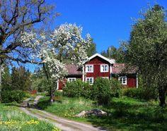 A Swedish summer dream