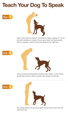 Training your puppy is about building your relationship with your dog and setting up boundaries. Be firm yet consistent and you'll see amazing results when it comes to your dog training work. Dog Training Near Me, Puppy Training Tips, Potty Training, Training Dogs, Training Classes, Training Schedule, Training Online, Leash Training, Training Exercises