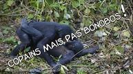 Copains mais, attention... pas Bonobos !  Pensée profonde exige de la hauteur ! Erick BERNARD rencontre Erick BERNARD. Quand deux grands philosophes se rencontre !!!