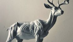 Sculpting Animals with Steve Lord | UArtsy