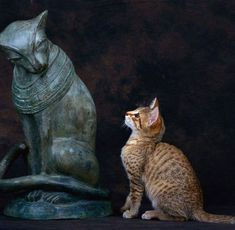 Bastet statuette with a bronze Egyptian Mau! (I have a bronze Mau, who looks just like this one)! Cute Kittens, Cats And Kittens, Crazy Cat Lady, Crazy Cats, I Love Cats, Cool Cats, Egyptian Mau, Egyptian Goddess, Egyptian Tattoo