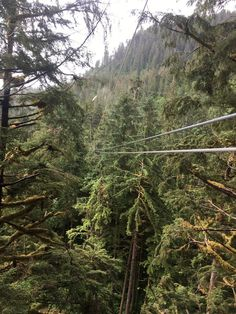 Alaska Canopy Adventures (Ketchikan) Top Tips Before You Go (with Photos) & Alaska Canopy Adventures (Ketchikan): Top Tips Before You Go (with ...