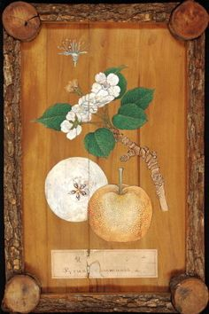 Pear wood example from a 19th century Japanese xylothek at Kew Gardens (via WRBG Kew). article-image