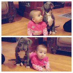 Baby and pit bull puppy