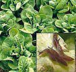 Natural Slug Control: Safe, Non-toxic products, solutions & formulas for controlling slugs | Eartheasy.com