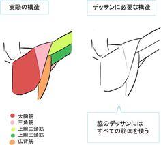 筋肉と骨でシンプルに解説! 脇・肘の描き方|イラストの描き方 脇の構造 Drawing armpits and elbows is easy if you understand muscles and bones | Illustration Tutorial Armpit structure