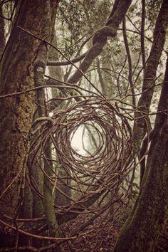 down the rabbit hole? Simon Max Bannister