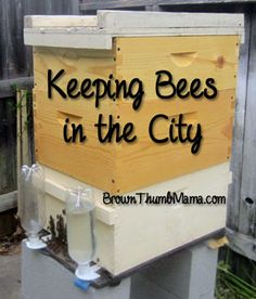 Keeping Bees in the City: The First 30 Days - Brown Thumb Mama