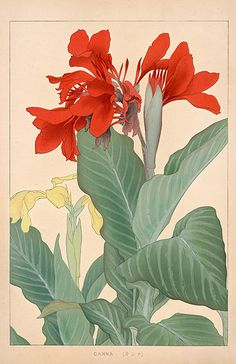 Chigusa Soun Flowers of Japan Woodblock Prints 1900 Vintage Botanical Prints, Botanical Drawings, Botanical Illustration, Botanical Art, Illustration Art, Lilies Drawing, Guache, Japanese Painting, Japan Art