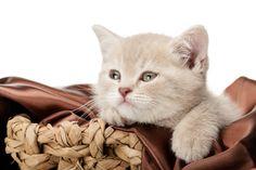 Was macht eine gute Transportbox für Katzen aus? - http://www.transportbox-katzen.de/was-macht-eine-gute-transportbox-fuer-katzen-aus/