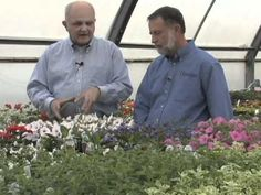"""""""Selecting Annuals for Your Garden Conditions"""""""