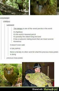 The Precious Moss Potato