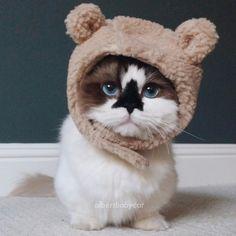 Albert Baby Cat Instagram | Sucesso no Instagram: se liga no gatinho que tem encantado pessoas do ...