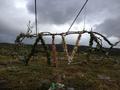 Arctic Circle Arctic Circle, Scandinavian Design, Environment, Places, Nature, Naturaleza, Nature Illustration, Off Grid, Nordic Design