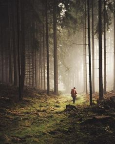 Germany | theolator | #adventure #travel #wanderlust #nature #photography