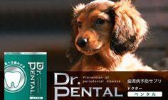 愛犬の歯周病のことなんて考えなかった!? 今からでもケアは遅くありませんよ! 食べる歯みがき「Dr.ペンタル」で!!」 timein.jp