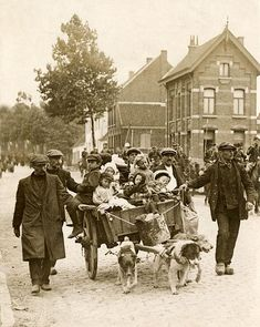 Belgian refugees with a dogcart, on their way from Aalst to Gent, Belgium, 1914.