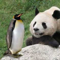 Panda, Penguin, and the EMD Update – What You Need to Know Social Media Topics, Google Penguin, Penguin Love, We The Best, Search Engine Optimization, Penguins, Panda, Author, Change