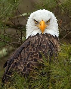 √ 11 Types of Eagles in The World With Awesome Pictures The Eagles, Types Of Eagles, Bald Eagles, Pretty Birds, Love Birds, Beautiful Birds, Animals Beautiful, Nature Animals, Animals And Pets