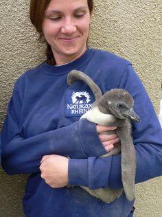 3_p16_l  ...penguins go to kindergarten...