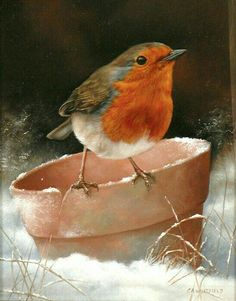 Beautiful Robin my favourite little bird Watercolor Bird, Watercolor Paintings, Bird Paintings, Robin Bird, Bird Pictures, Little Birds, Wildlife Art, Wildlife Paintings, Bird Art