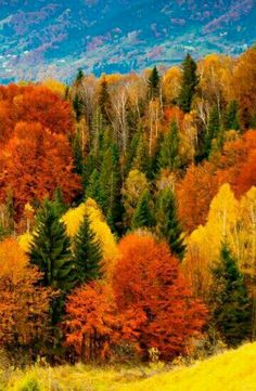 Beautiful fall, most amazing time of the year❣😍🍁🍂🍎 Fall Pictures, Fall Photos, Nature Pictures, All Nature, Amazing Nature, Beautiful World, Beautiful Places, Autumn Scenes, Belle Photo